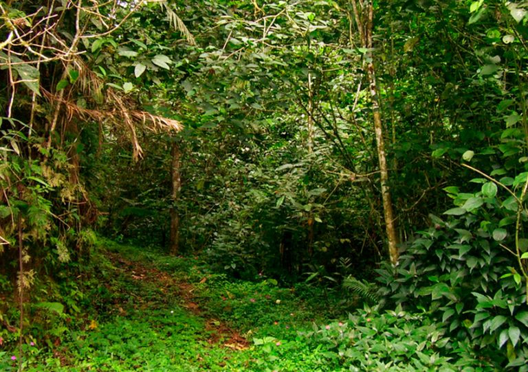 Sendero en franja forestal protectora