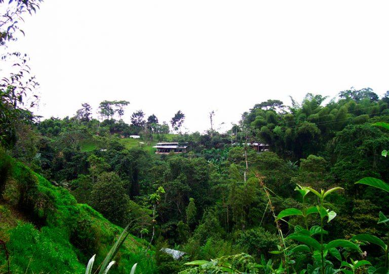 Vista panorámica de CABRITA desde ladera sembrada de pastos, al frente cabaña y establos, al centro franja forestal protectora.