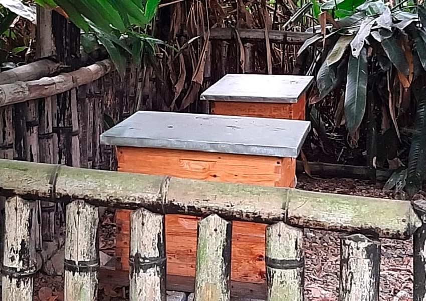 apiario-3