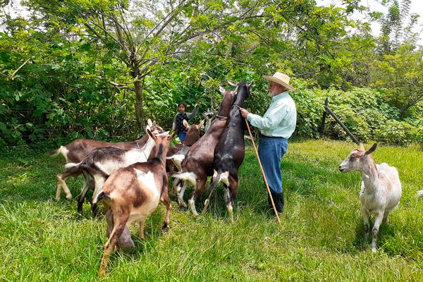 Finca Herencia José María con cabras ramoneando