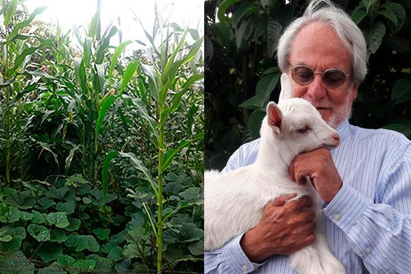 Cultivo de maíz y zapayo
